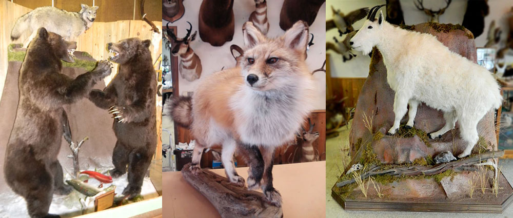 Artistic Taxidermy - Garret Heying, Portland, Oregon
