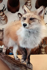 Artistic Tapestry: Life-size fox